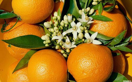 Загрузка картинки: апельсин, цветы, фрукт / 2717 / globalwalls.ru.