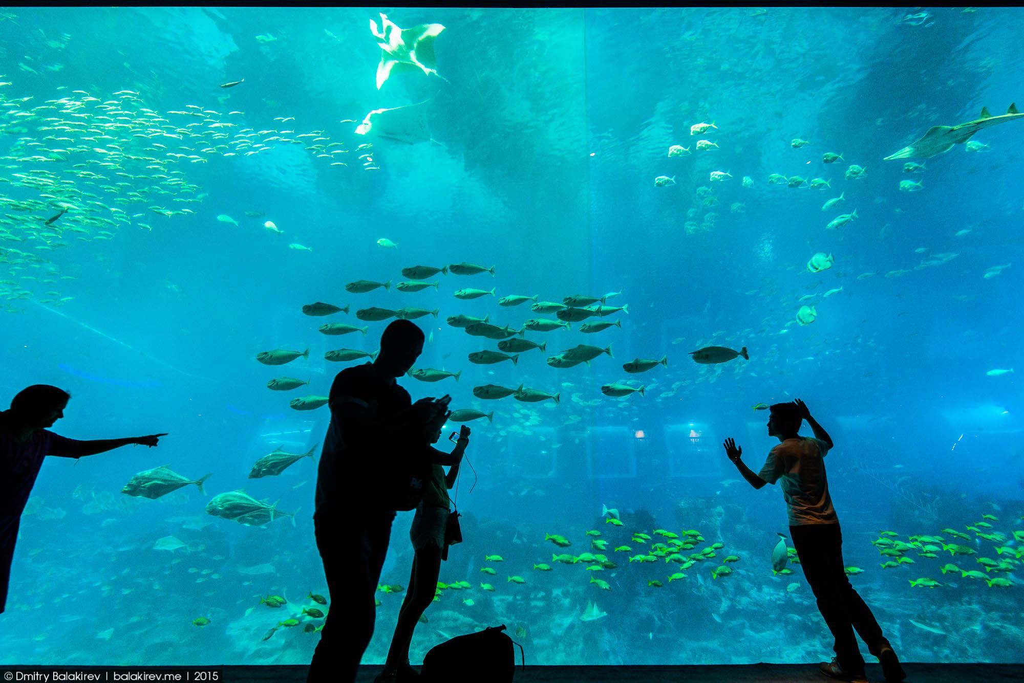 Сингапурский океанариум