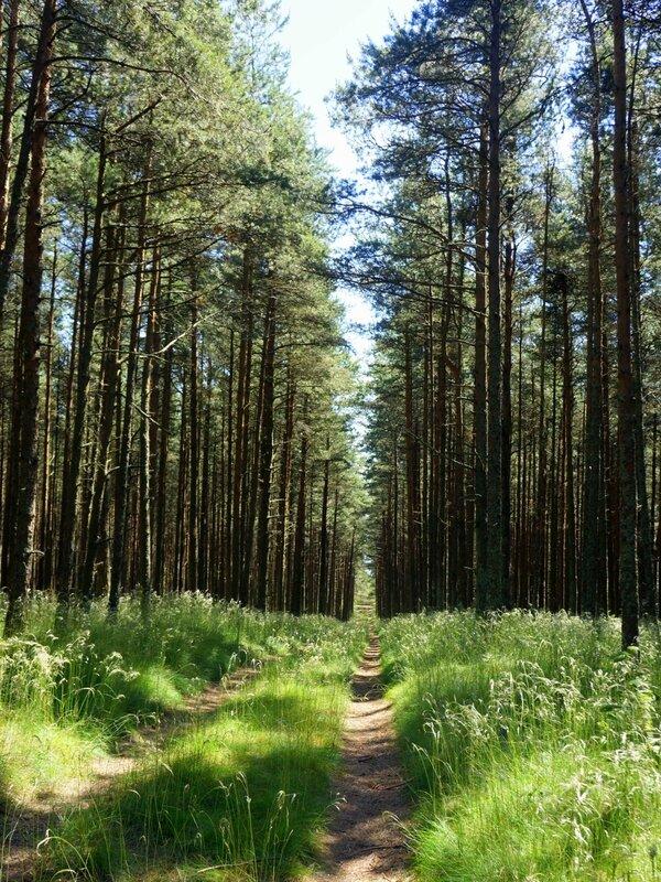 Просека в лесу на дюне Ореховая