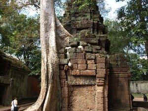 Ангкор. Даже не знаю, что больше впечатляет - развалины или дерево.