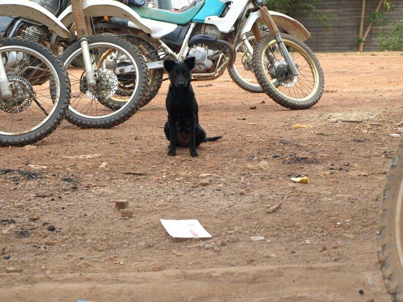 Собаки Камбоджи