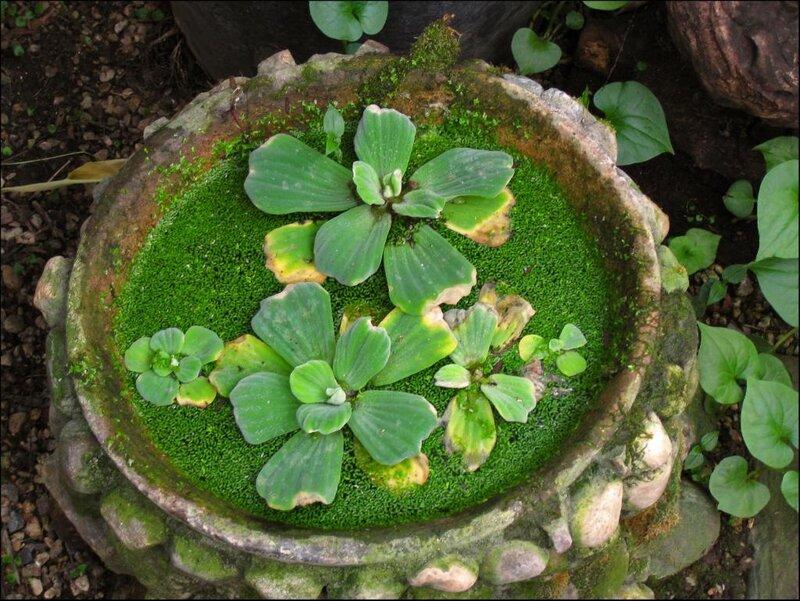 Мини-пруд в японском садике