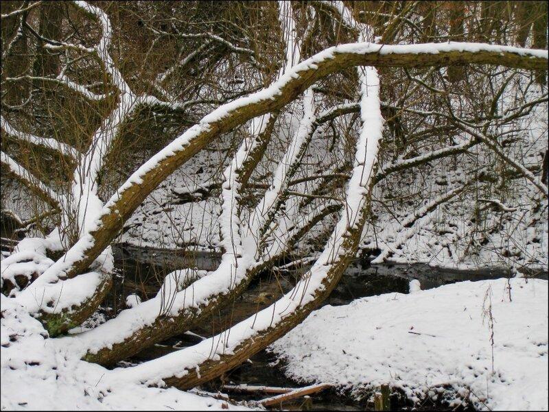 Участок дикого леса вдоль реки Падер, Германия