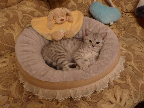 http://img-fotki.yandex.ru/get/4009/dveri-vsem1.1/0_44f7b_40db6f3e_L.jpg