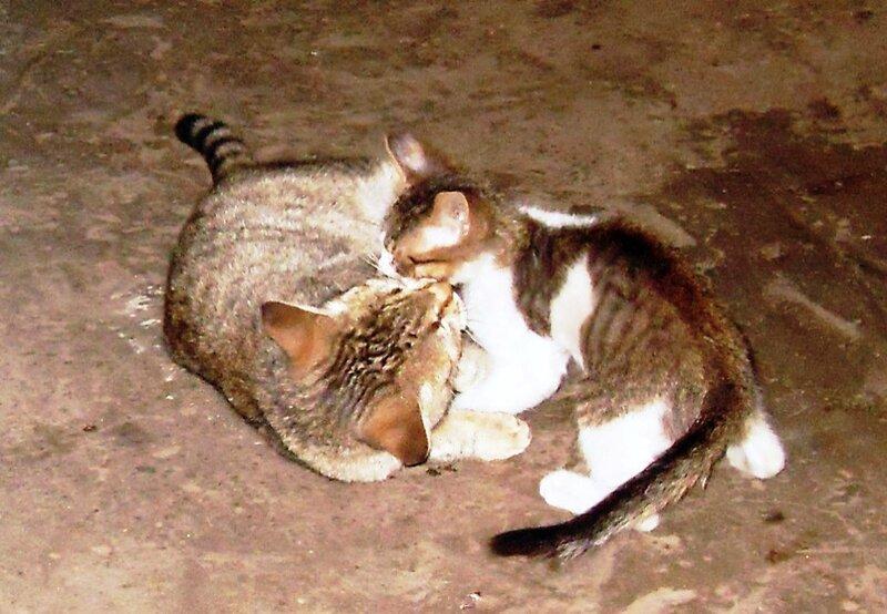 Кошачьи игры (1)