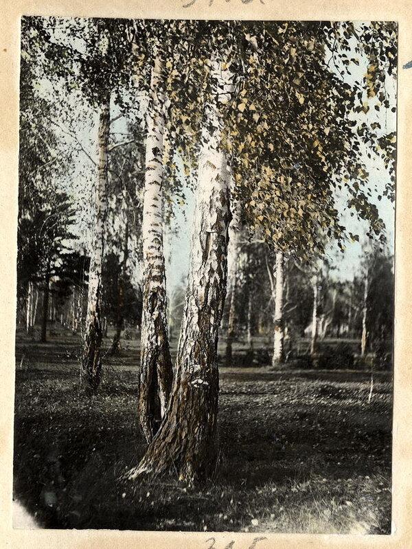 Сырьевая база лесохимии
