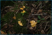 http://img-fotki.yandex.ru/get/4010/15842935.148/0_d0d0e_9a6f9f38_orig.jpg