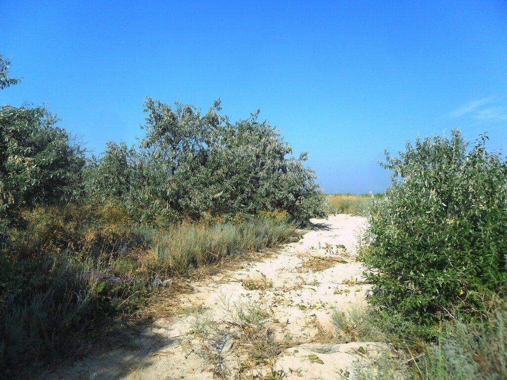 Песчаная дорога, заросли ... SAM_3280.JPG