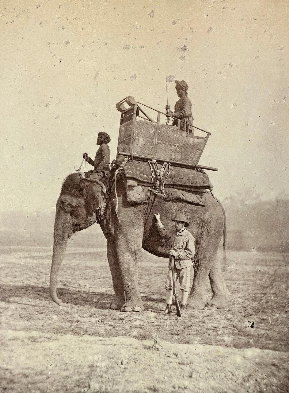 127. Полковник сэр Август Фицджордж (1847-1933) на слоне