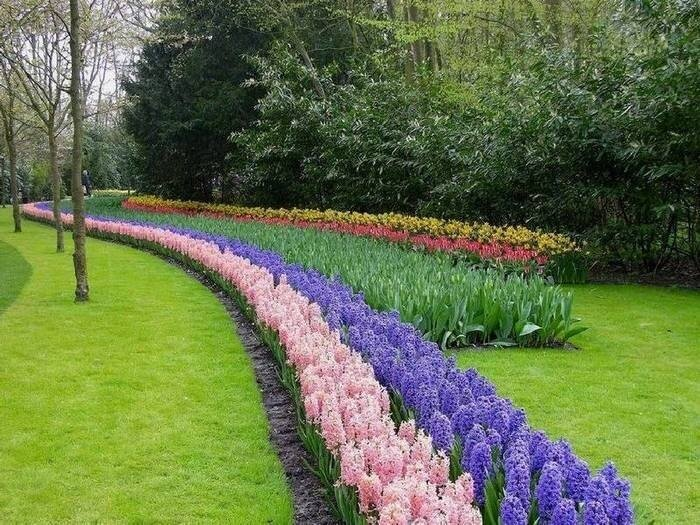 Что за цветы сажают в парках 301