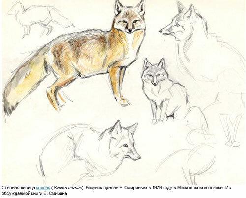 В а ватагин рисунки животных