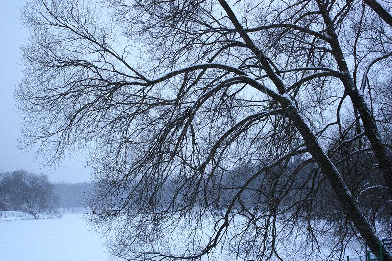 Ветви и снегопад