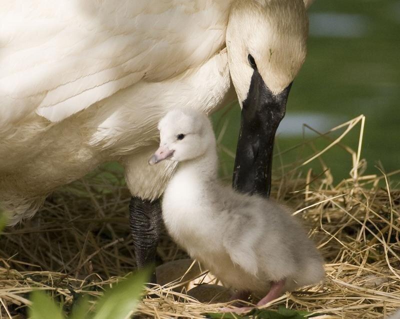 фото животных - родители и дети