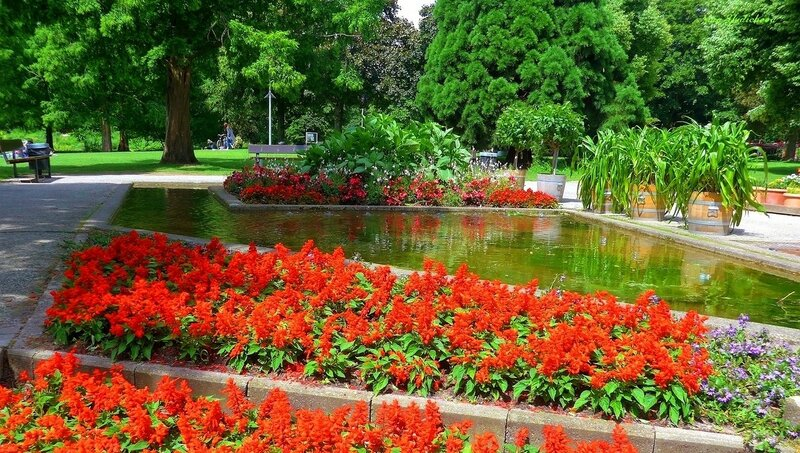 Красные цветы у воды