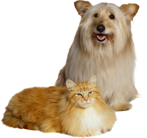 собака с кошкой
