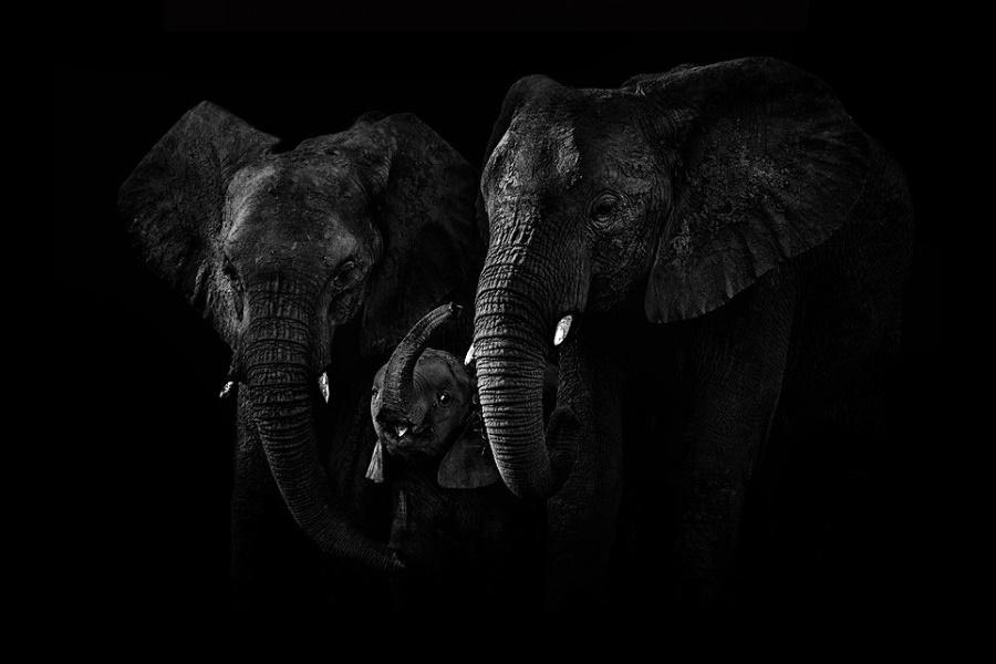 Лукас Холас. Черно белые портреты животных 0 1419e1 5dfffb65 orig