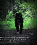 2015-07-03 Гром в лесу.jpg