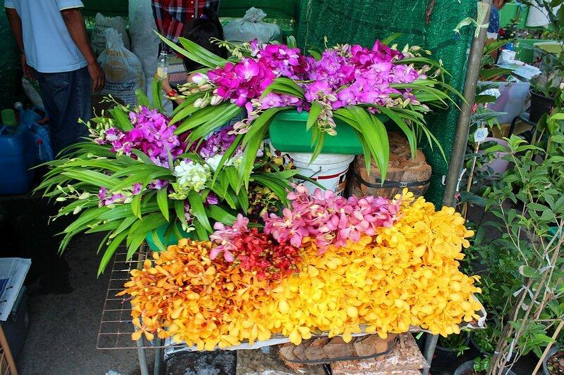 Продажа цветущих орхидей на рынке Талинг Чан, Бангкок