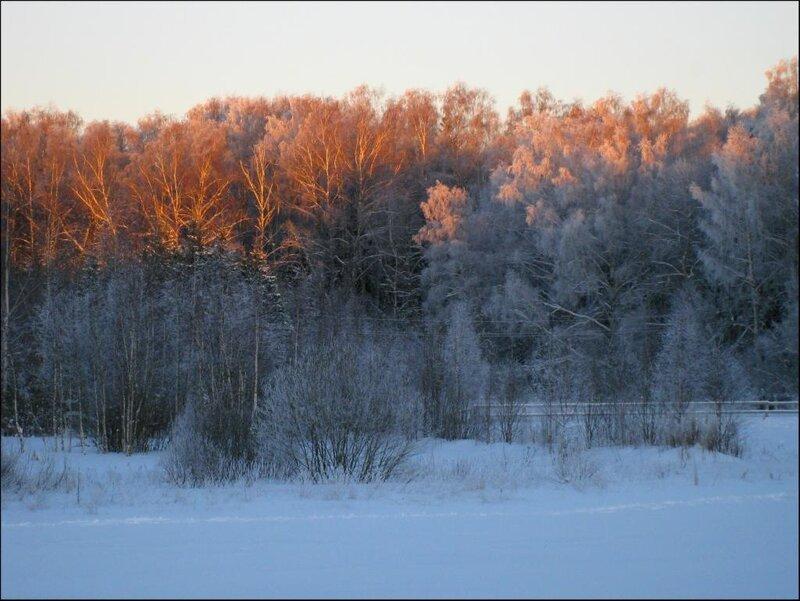 Зимний лес в лучах закатного солнца