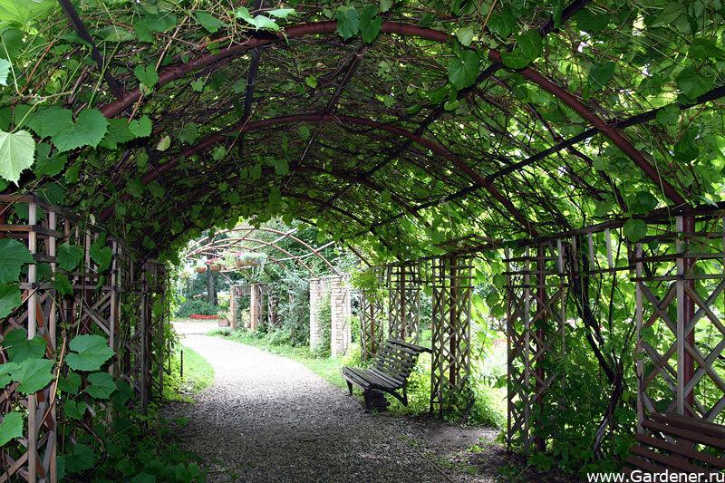 Ботанический сад на