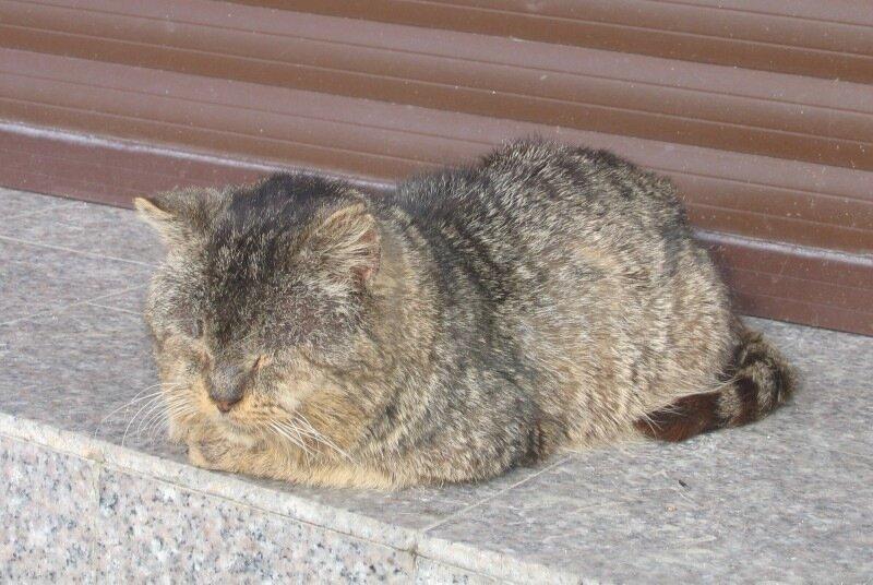 Сочинский кот