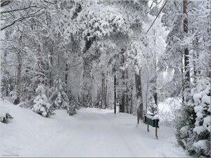Деревенская дорога.