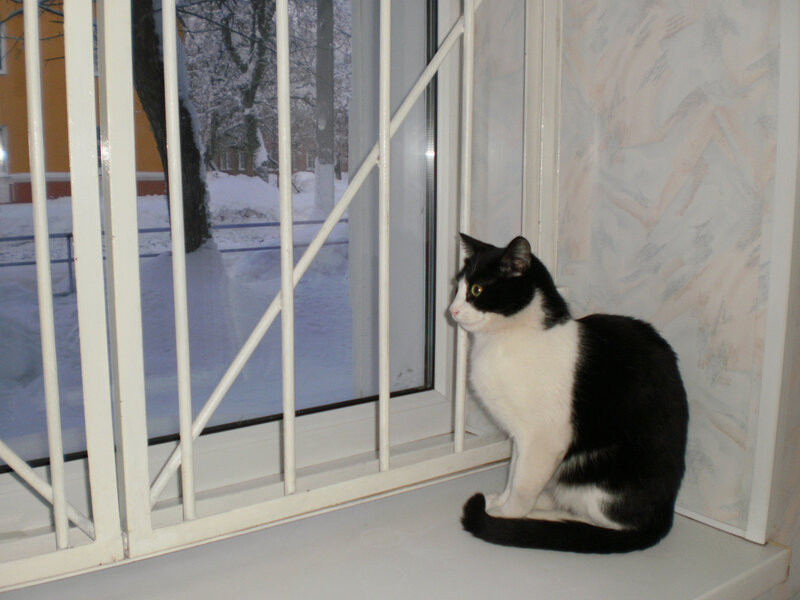 Магазинный кот или кошка