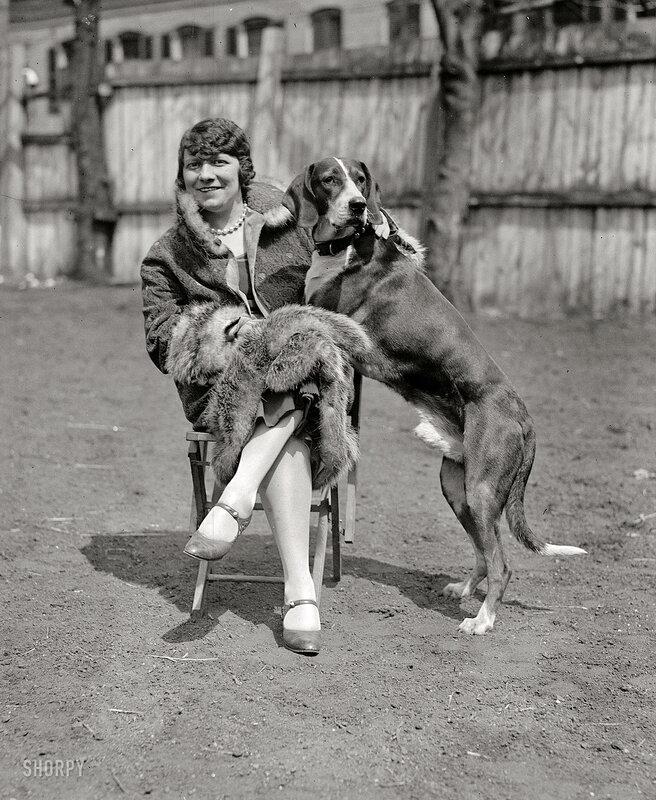 Старинное фото.Портрет с собакой,1917