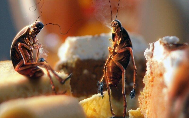 Эволюция научила тараканов избегать ядов