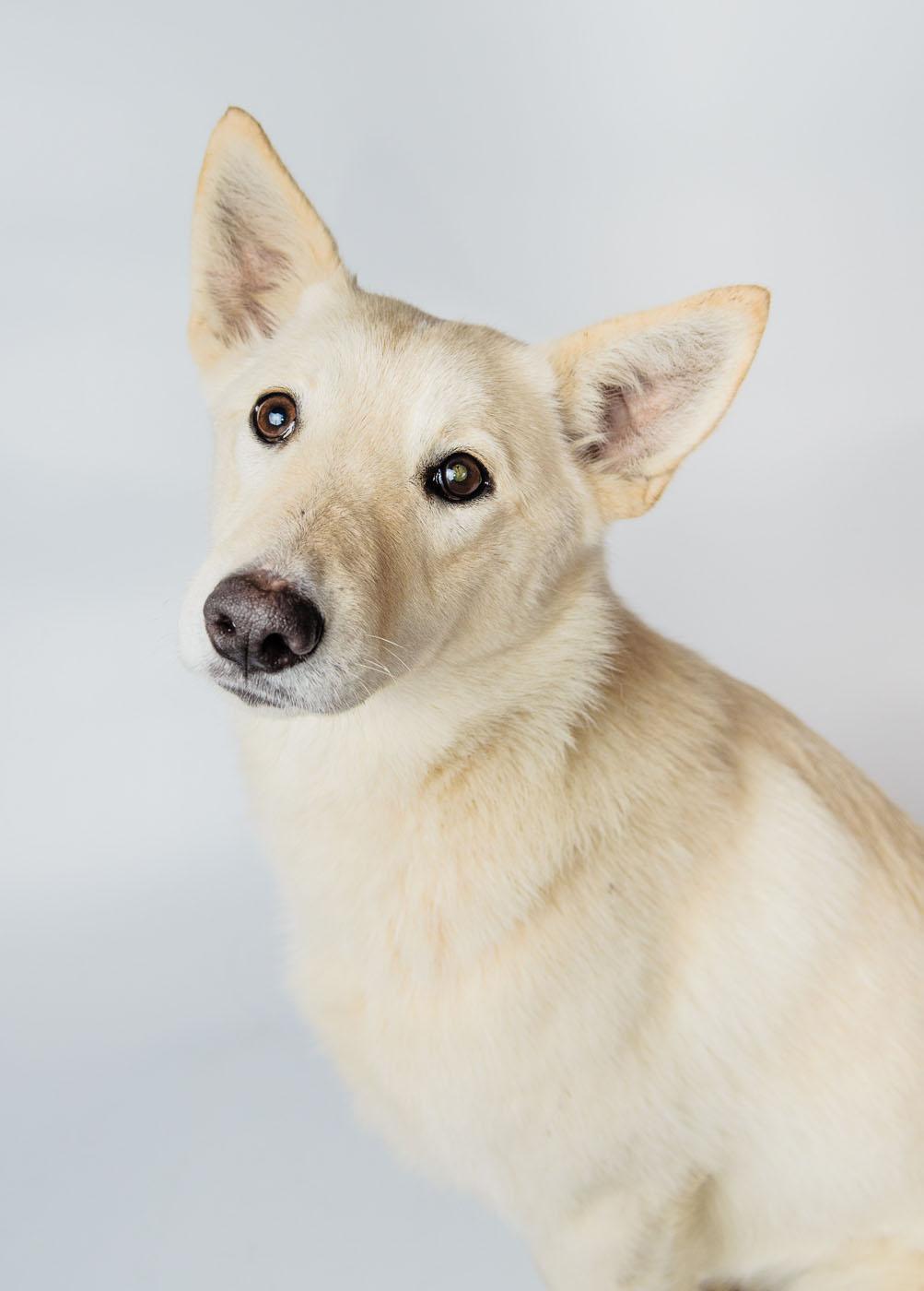 собака Эльза из приюта догпорт