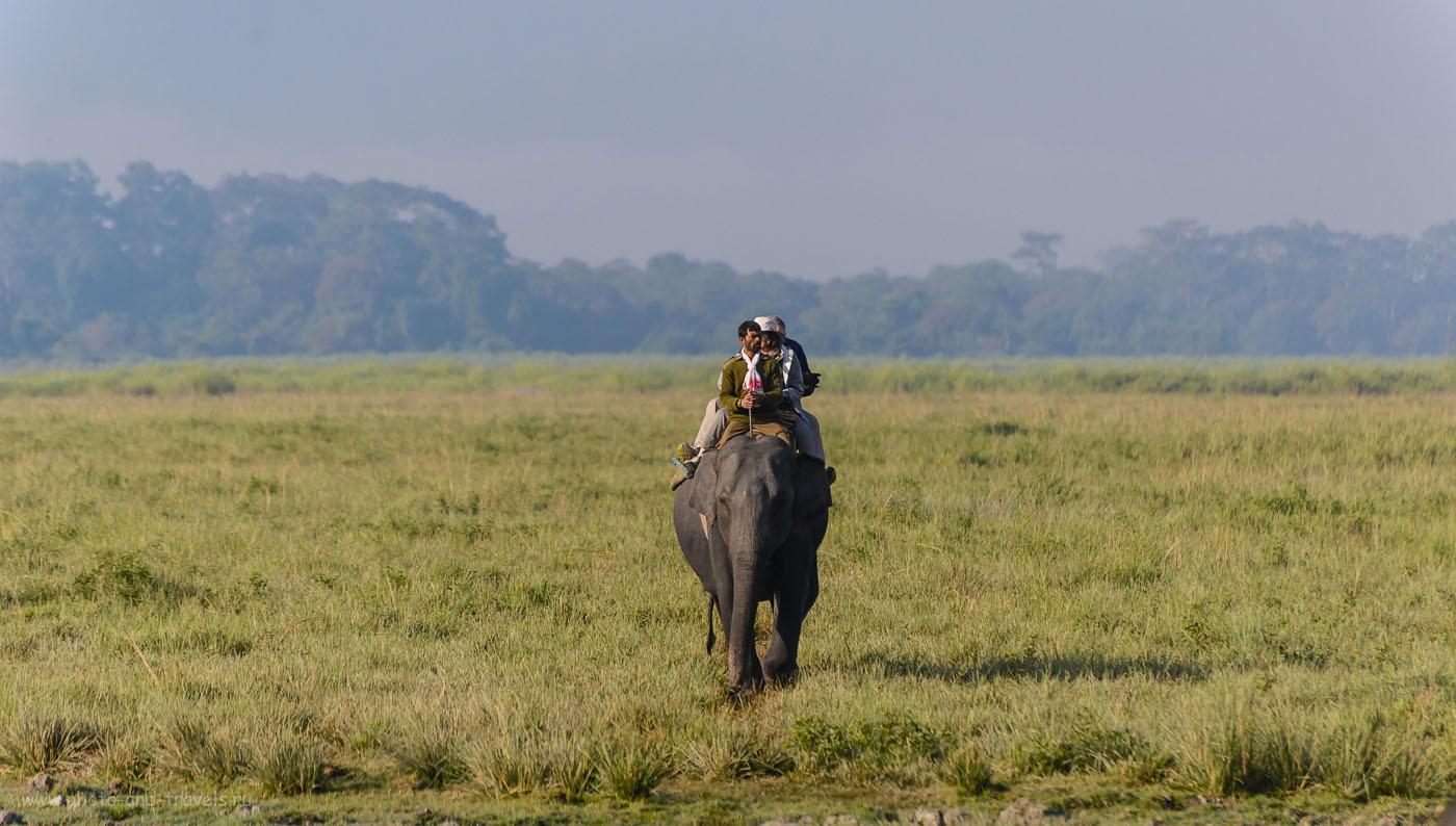 Фотография 18. Слоновье сафари в Индии. Очень интересное развлечение. Отзывы туристов из России. 1/800, -0.67, 5.6, 200, 300.