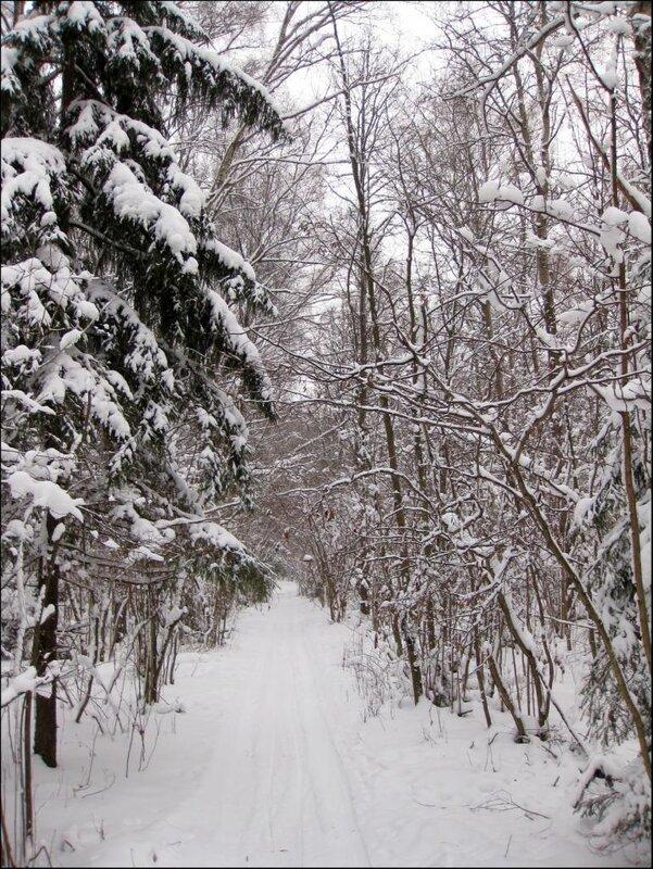 Снежная дорожка