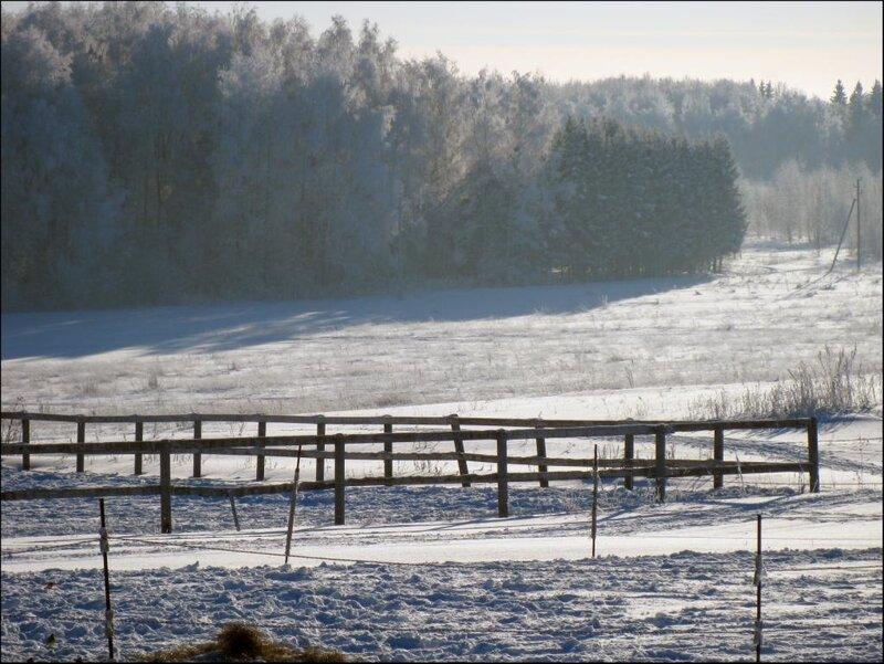 Зимним днем на конюшне