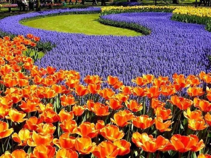 Сады цветы голландия фото