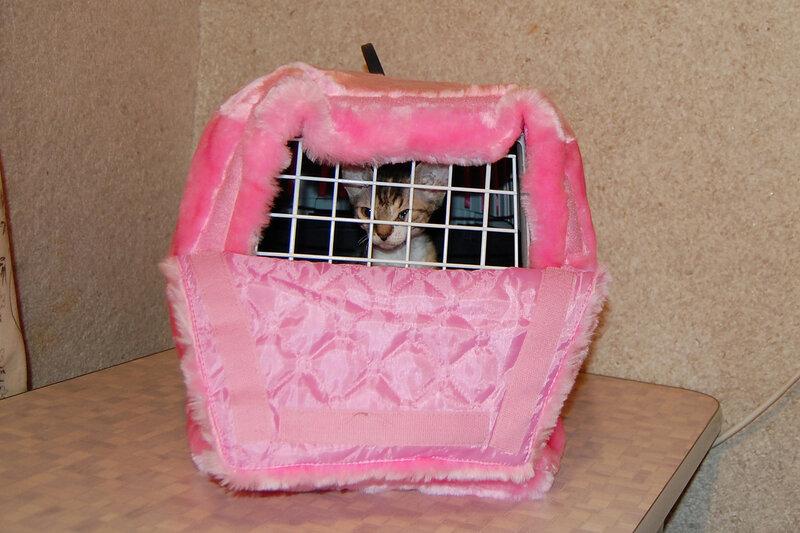 Как сделать сумку переноску для кошки своими руками из картона 21