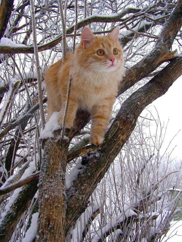 Котик Персик-Рыжик