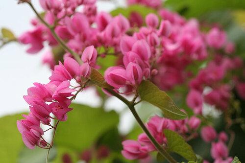 Цвета осени