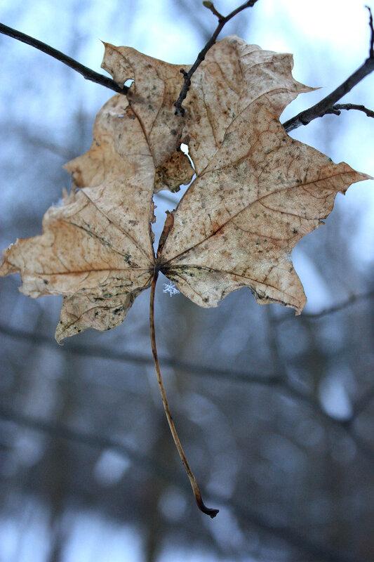 Лист клена со снежинкой
