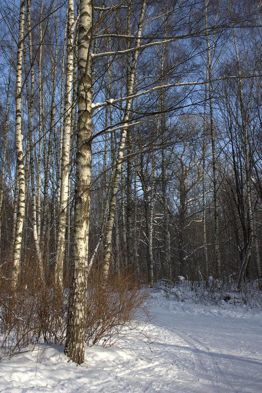 Солнце и зима