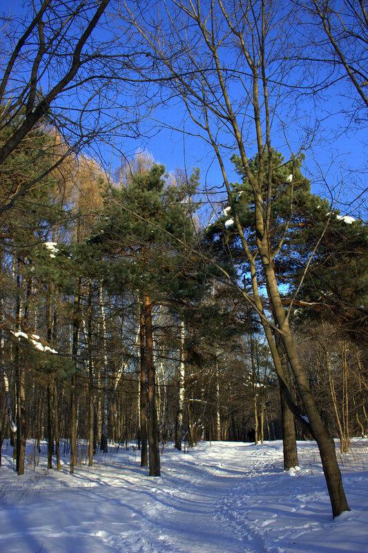 По лыжне в парк