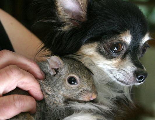 дружба животных