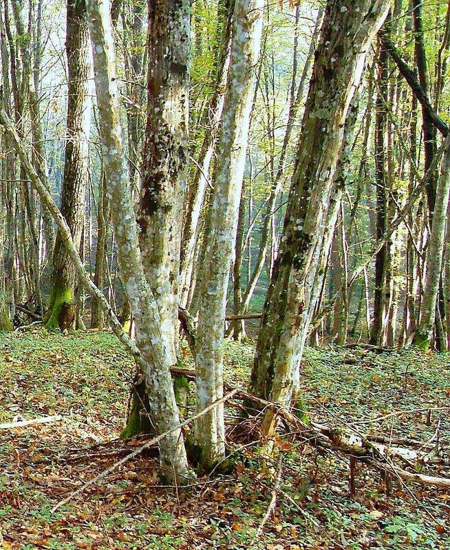 Среди деревьев, под Горячим Ключом, на слёте ... (190).JPG