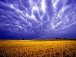 violet-sky-1600.jpg