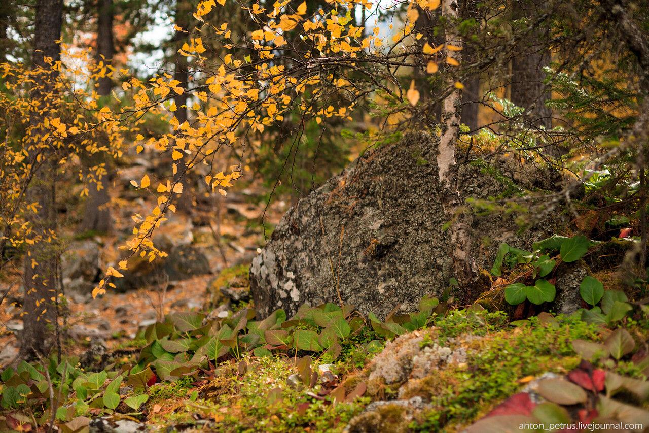 Осенний пейзаж. Алтай