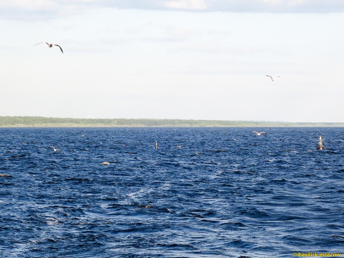 Белое море. Июнь 2013.