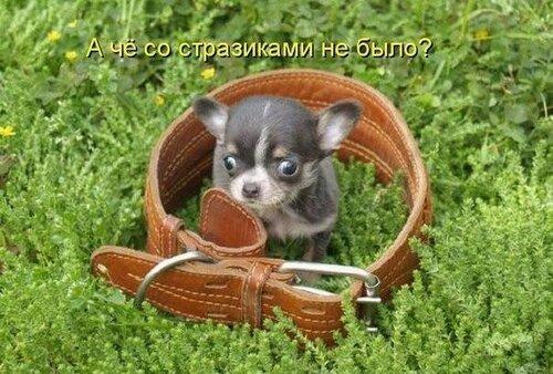https://img-fotki.yandex.ru/get/4014/37228632.f/0_9532b_9bf5b198_L.jpg