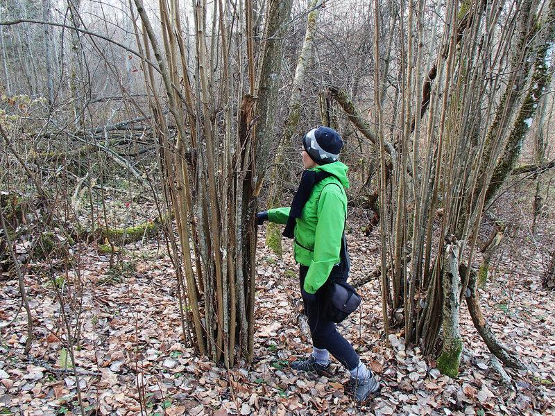 Псковская область, ноябрь, лес