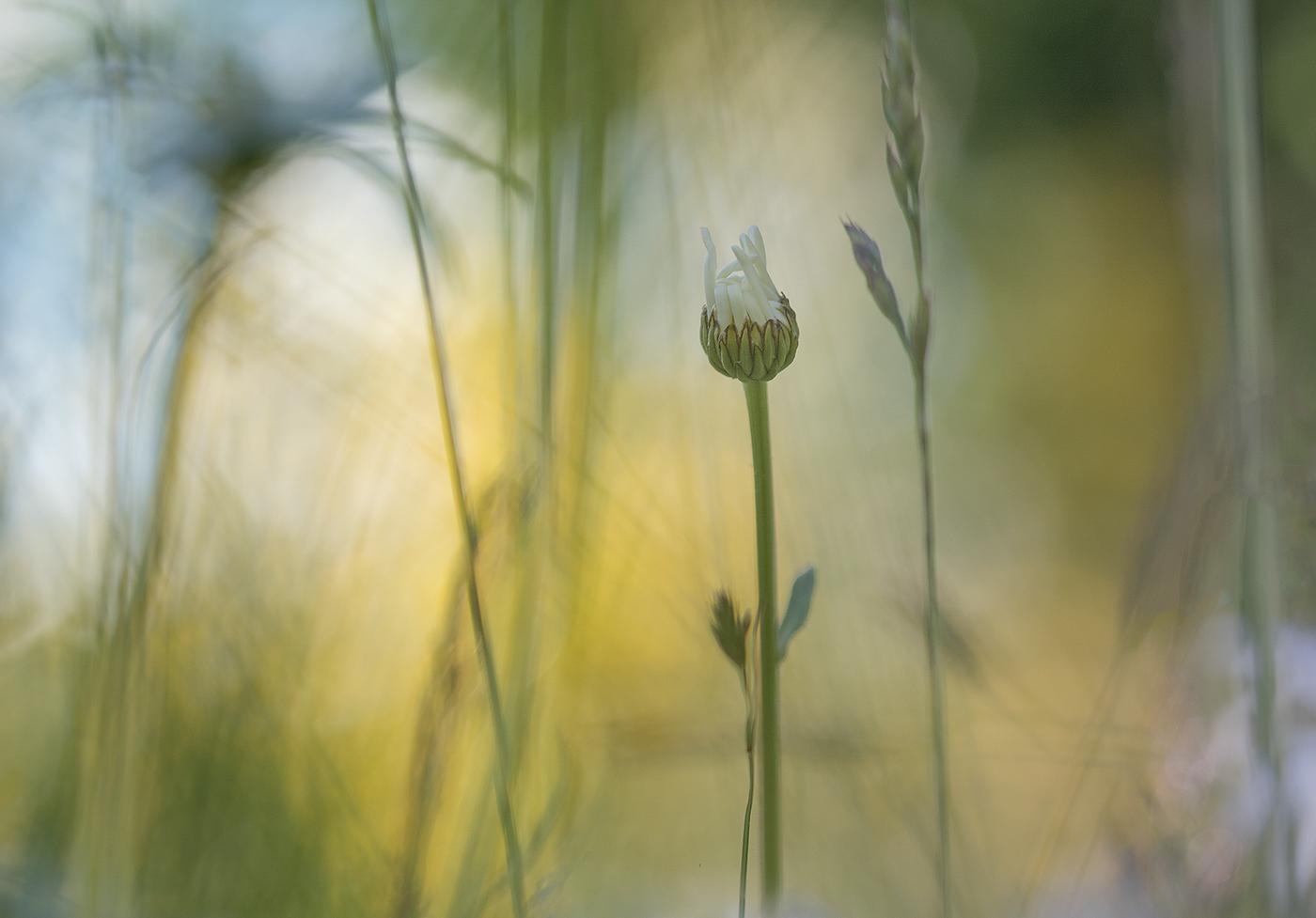 Клевер и ромашки / фото Lena Sanver