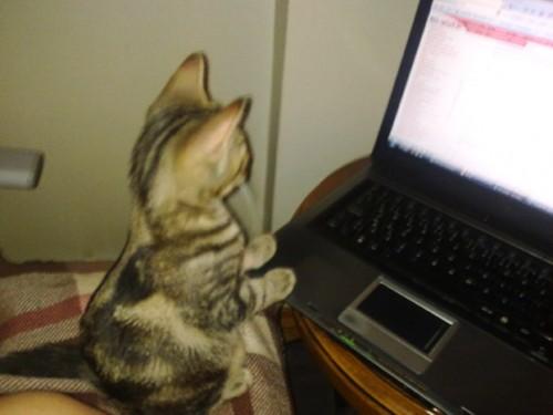 Кот-программист