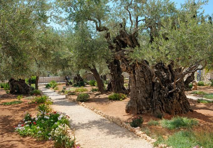Музей Израиля Более 500 000 экспонатов! Музей Израиля в Иерусалиме славится огромной коллекцией архе